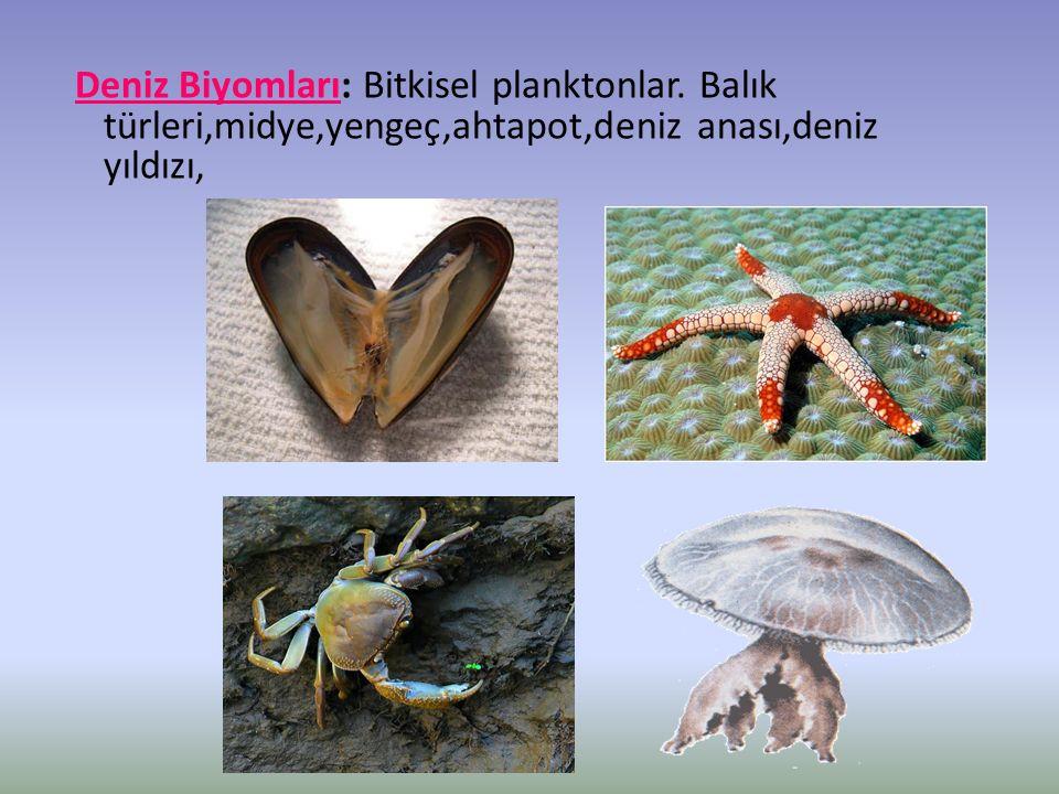 Deniz Biyomları: Bitkisel planktonlar.