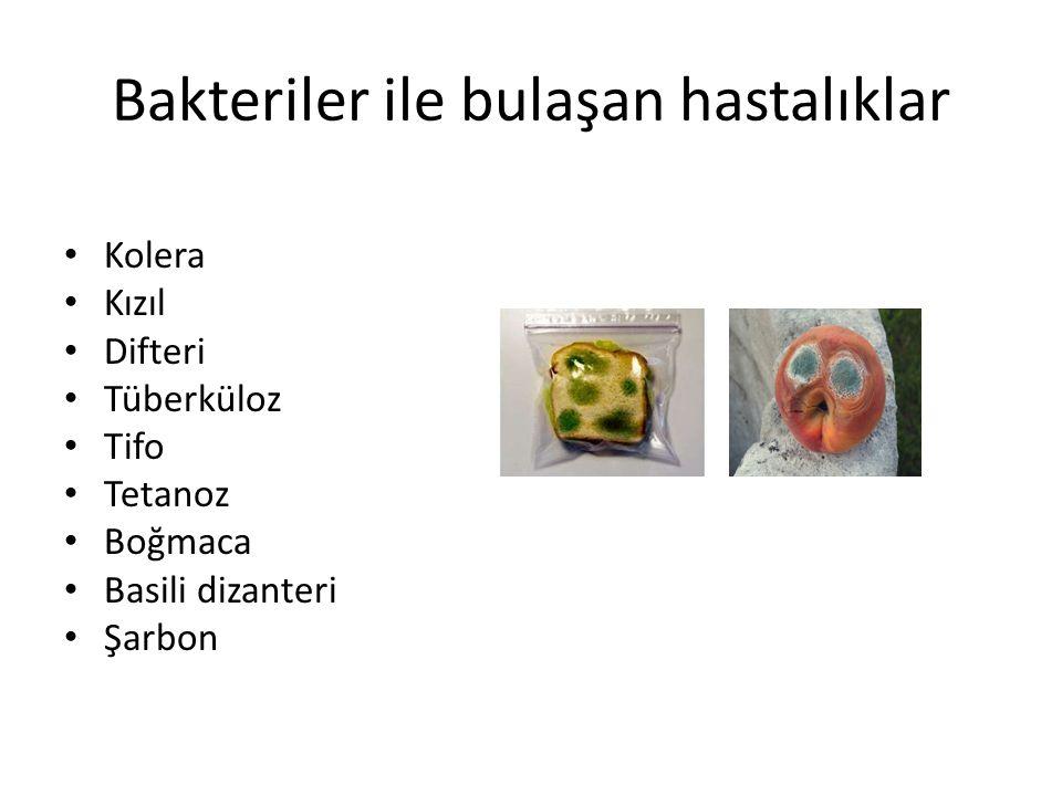 Bakteriler ile bulaşan hastalıklar Kolera Kızıl Difteri Tüberküloz Tifo Tetanoz Boğmaca Basili dizanteri Şarbon