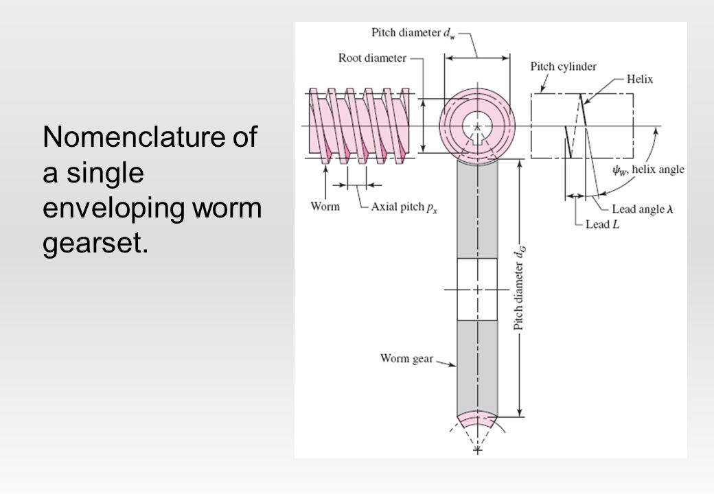 Nomenclature of a single enveloping worm gearset.