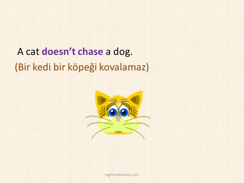 A cat doesn't chase a dog. (Bir kedi bir köpeği kovalamaz) ingilizcebankasi.com