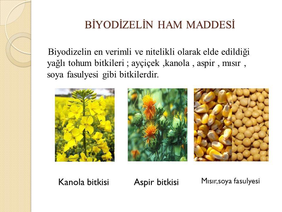 BİYODİZELİN HAM MADDESİ Biyodizelin en verimli ve nitelikli olarak elde edildiği yağlı tohum bitkileri ; ayçiçek,kanola, aspir, mısır, soya fasulyesi