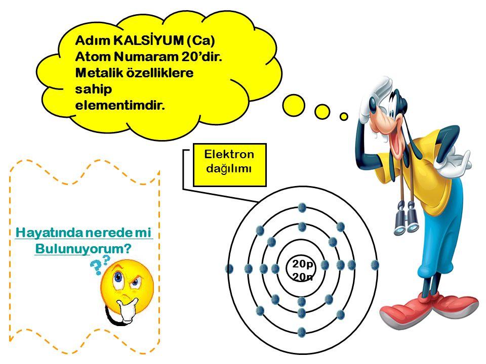 Adım KALS İ YUM (Ca) Atom Numaram 20'dir. Metalik özelliklere sahip elementimdir. Elektron da ğ ılımı 20p 20n Hayatında nerede mi Bulunuyorum?