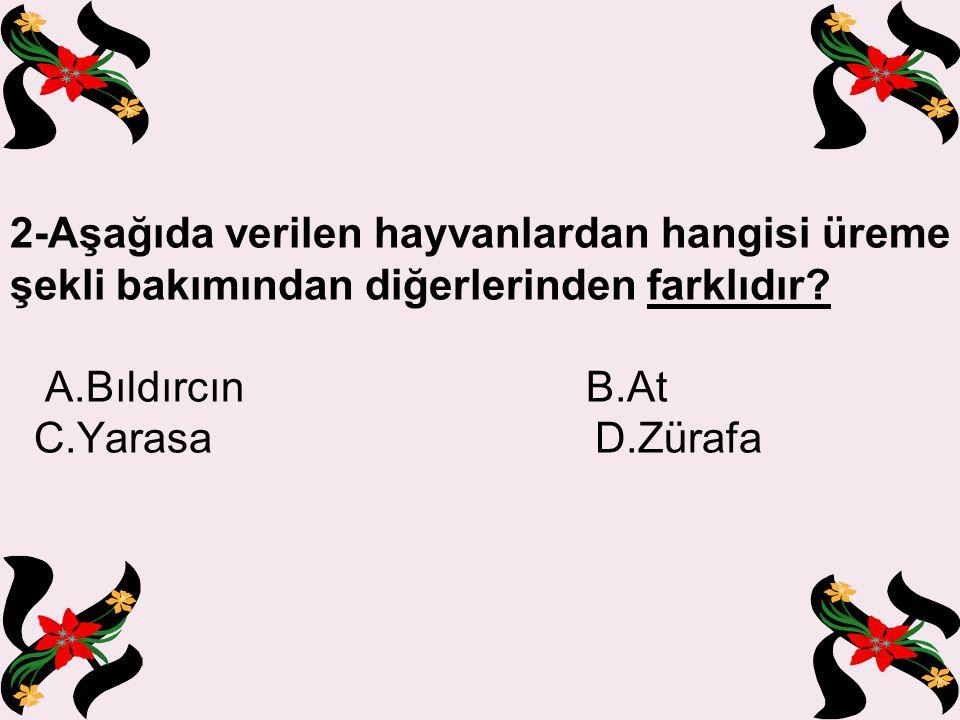 12- I.Balık II. Kurbağa III. İnsan IV.