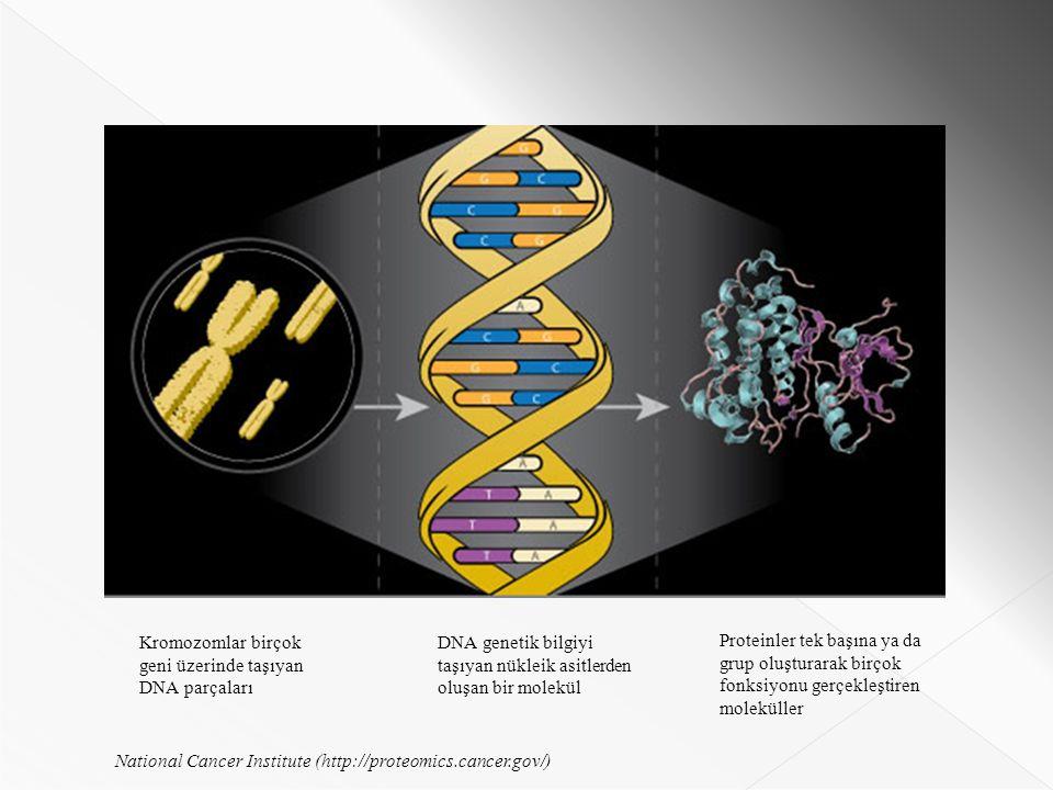 National Cancer Institute (http://proteomics.cancer.gov/) Kromozomlar birçok geni üzerinde taşıyan DNA parçaları DNA genetik bilgiyi taşıyan nükleik asitlerden oluşan bir molekül Proteinler tek başına ya da grup oluşturarak birçok fonksiyonu gerçekleştiren moleküller