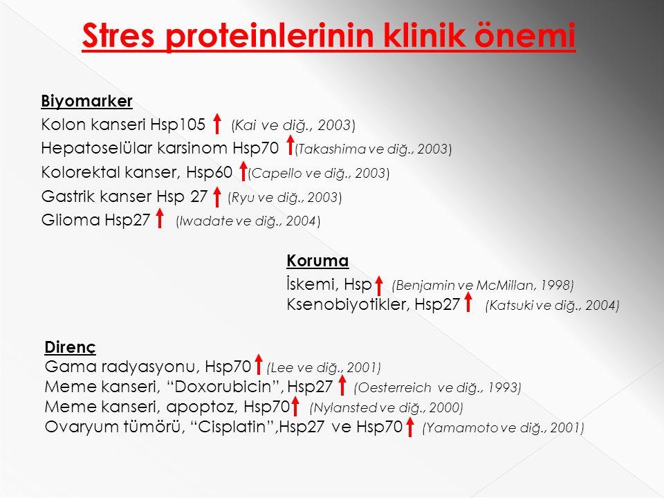 Koruma İskemi, Hsp (Benjamin ve McMillan, 1998) Ksenobiyotikler, Hsp27 (Katsuki ve diğ., 2004) Biyomarker Kolon kanseri Hsp105 (Kai ve diğ., 2003) Hepatoselülar karsinom Hsp70 (Takashima ve diğ., 2003) Kolorektal kanser, Hsp60 (Capello ve diğ., 2003) Gastrik kanser Hsp 27 (Ryu ve diğ., 2003) Glioma Hsp27 (Iwadate ve diğ., 2004) Direnç Gama radyasyonu, Hsp70 (Lee ve diğ., 2001) Meme kanseri, Doxorubicin , Hsp27 (Oesterreich ve diğ., 1993) Meme kanseri, apoptoz, Hsp70 (Nylansted ve diğ., 2000) Ovaryum tümörü, Cisplatin ,Hsp27 ve Hsp70 (Yamamoto ve diğ., 2001) Stres proteinlerinin klinik önemi