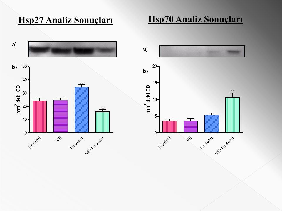 Hsp27 Analiz Sonuçları Hsp70 Analiz Sonuçları
