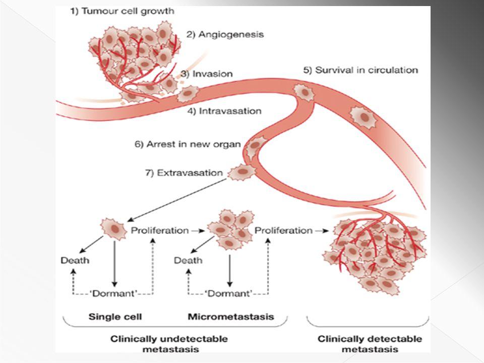 Cell Growth Motility Survival Proliferation Angiogenesis P P P P PDK1,2 Growth Factor Signaling Gene Transcription DNA Replication and Repair 16358910112 Plasma Membrane Nuclear Membrane 127477 1.Büyüme faktörleri 2.Büyüme faktörü reseptörleri 3.Adaptör proteinler 4.Proteinler 5.Guanin nukleotid değişim faktörleri 6.Fosfatazlar ve fosfolipazlar 7.Sinyal yolaklarındaki kinazlar 8.Ribozomlar 9.Transkripsiyon faktörleri 10.Histonlar 11.DNA 12.Mikrotübüller Microtubule Dynamics RNA Translation