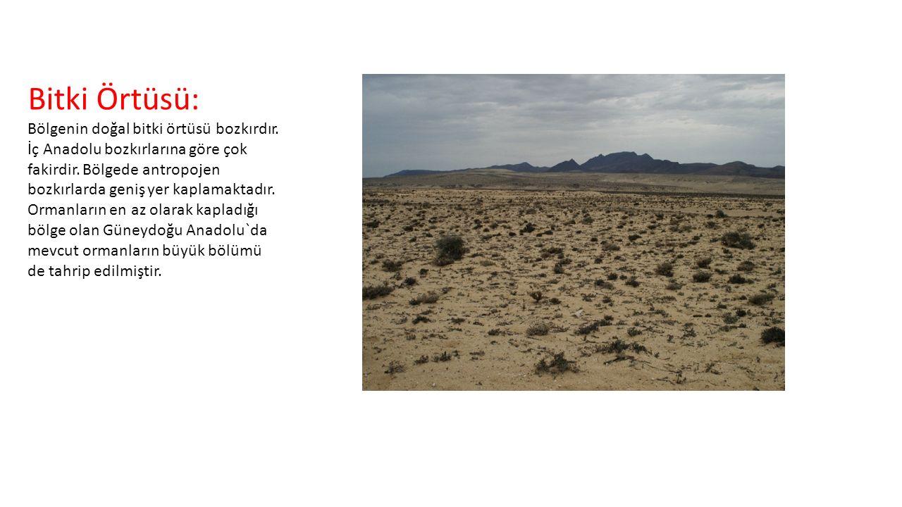 Bitki Örtüsü: Bölgenin doğal bitki örtüsü bozkırdır. İç Anadolu bozkırlarına göre çok fakirdir. Bölgede antropojen bozkırlarda geniş yer kaplamaktadır