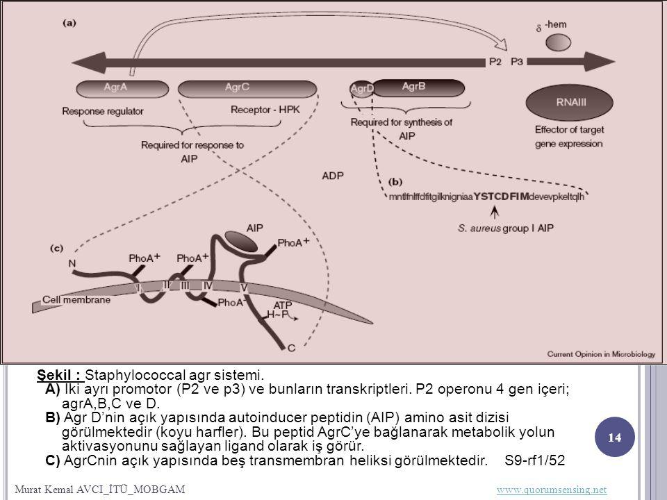 02.12.2009 14 Şekil : Staphylococcal agr sistemi.