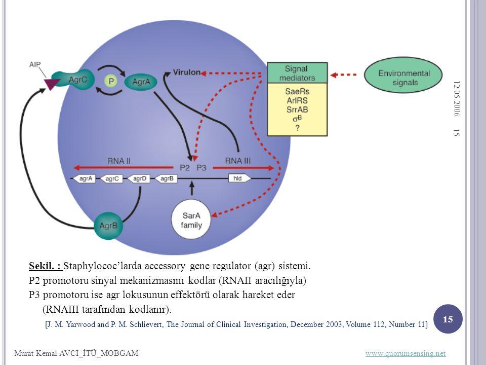12.05.2006 15 Şekil. : Staphylococ'larda accessory gene regulator (agr) sistemi.