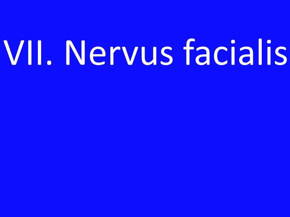 VII. Nervus facialis