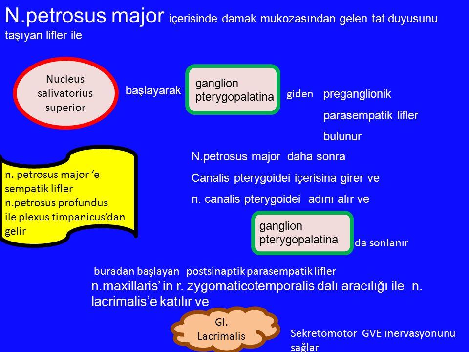 ganglion pterygopalatina N.petrosus major içerisinde damak mukozasından gelen tat duyusunu taşıyan lifler ile başlayarak preganglionik parasempatik li