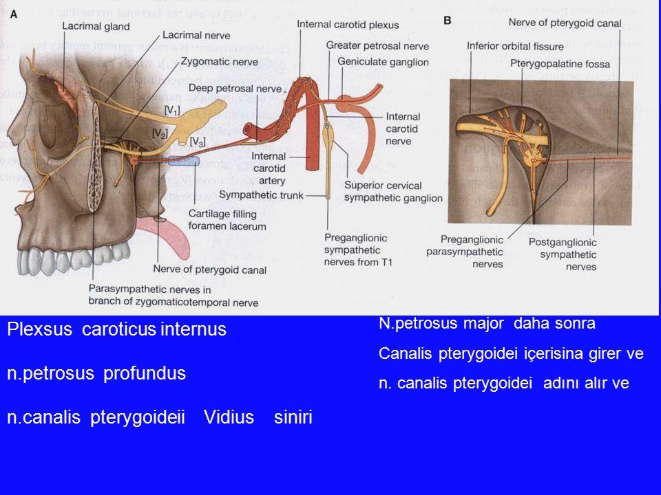 Plexsus caroticus internus n.petrosus profundus n.canalis pterygoideii Vidius siniri N.petrosus major daha sonra Canalis pterygoidei içerisina girer v