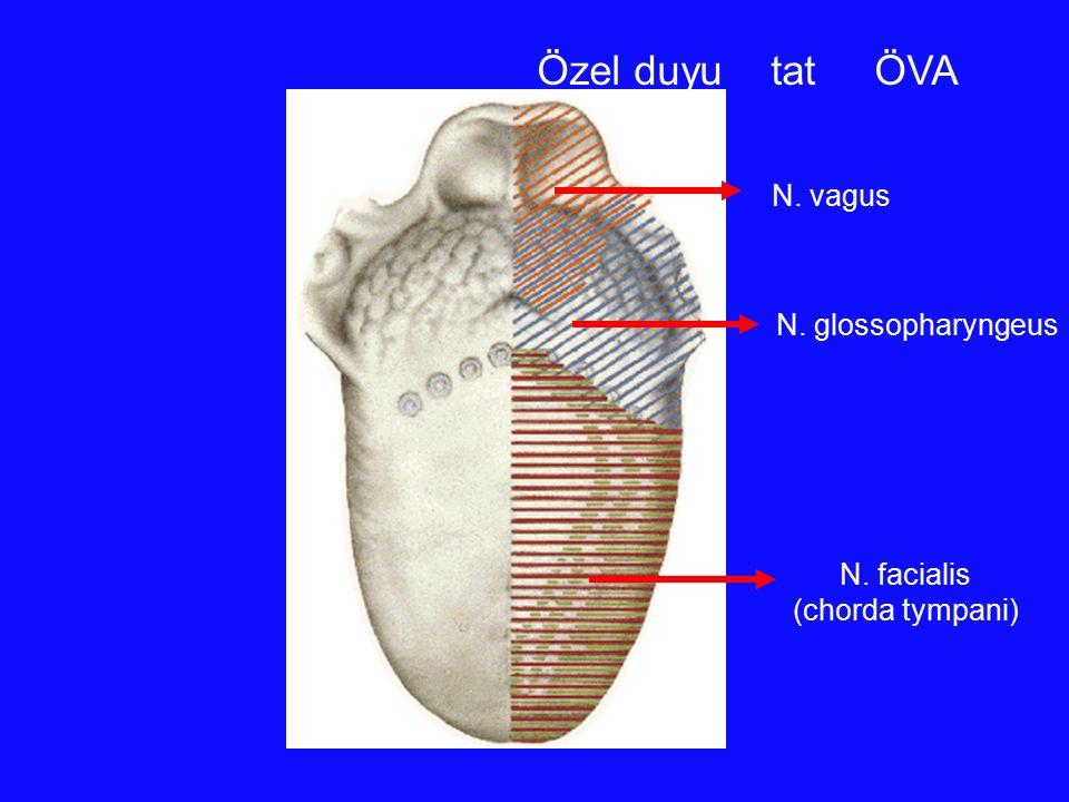 Özel duyu tat ÖVA N. facialis (chorda tympani) N. glossopharyngeus N. vagus