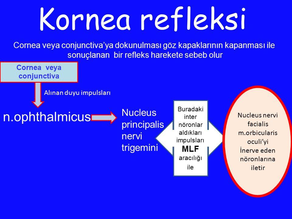 Kornea refleksi Cornea veya conjunctiva'ya dokunulması göz kapaklarının kapanması ile sonuçlanan bir refleks harekete sebeb olur Nucleus principalis n