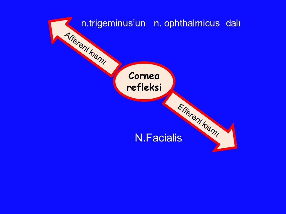 Cornea refleksi Efferent kısmı Afferent kısmı n.trigeminus'un n. ophthalmicus dalı N.Facialis