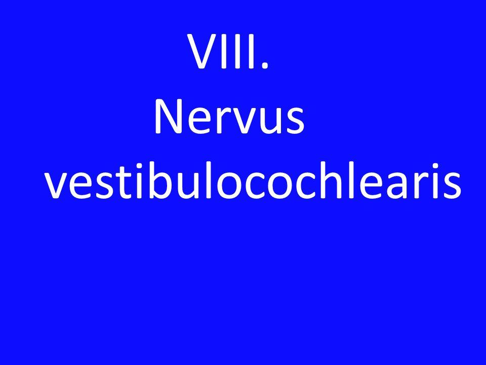 VIII. Nervus vestibulocochlearis