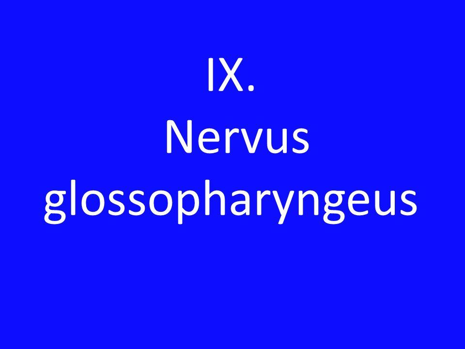 IX. Nervus glossopharyngeus