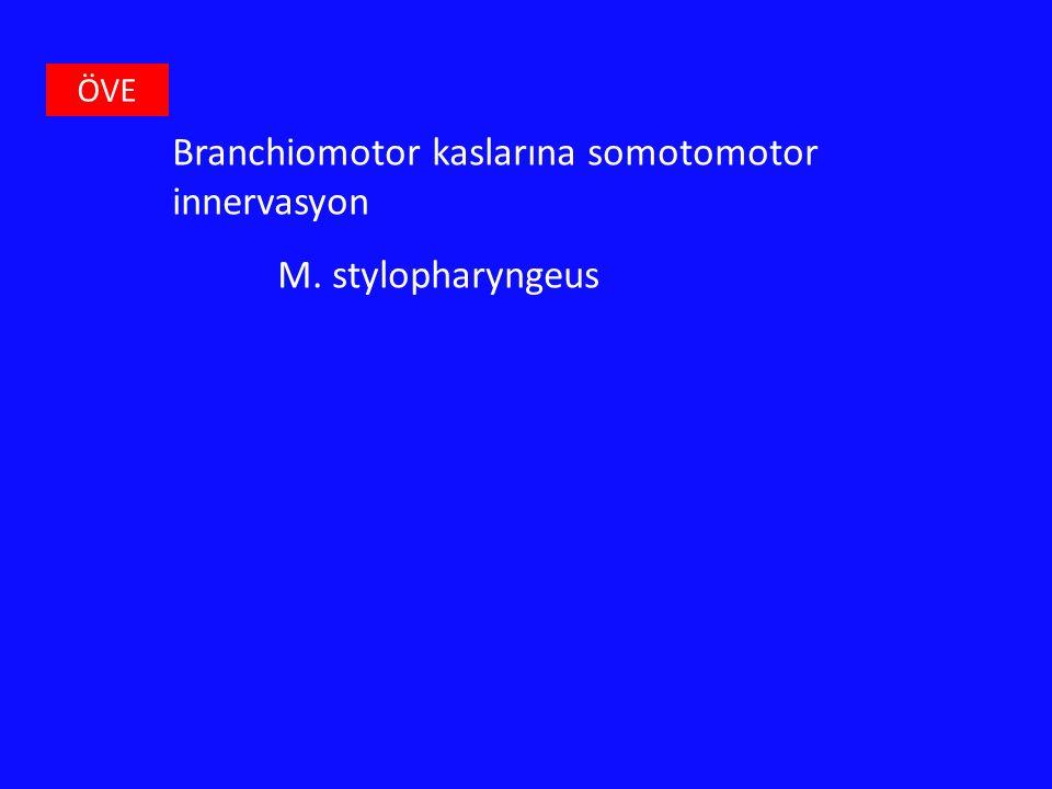 ÖVE Branchiomotor kaslarına somotomotor innervasyon M. stylopharyngeus