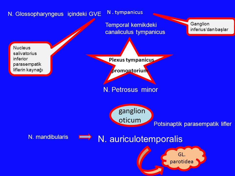 Nucleus salivatorius inferior parasempatik liflerin kaynağı N. Glossopharyngeus içindeki GVE N. tympanicus Temporal kemikdeki canaliculus tympanicus N