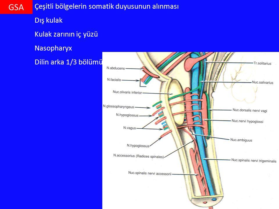 GSA Çeşitli bölgelerin somatik duyusunun alınması Dış kulak Kulak zarının iç yüzü Nasopharyx Dilin arka 1/3 bölümü