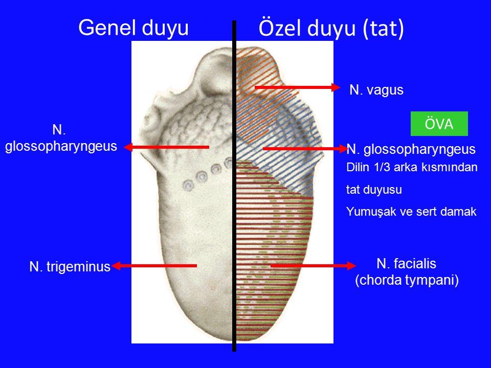 Genel duyu Özel duyu (tat) N. facialis (chorda tympani) N. glossopharyngeus N. vagus N. trigeminus N. glossopharyngeus Dilin 1/3 arka kısmından tat du