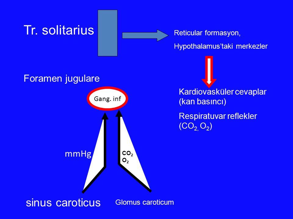 sinus caroticus mmHg Gang. inf Foramen jugulare Tr. solitarius Reticular formasyon, Hypothalamus'taki merkezler Kardiovasküler cevaplar (kan basıncı)