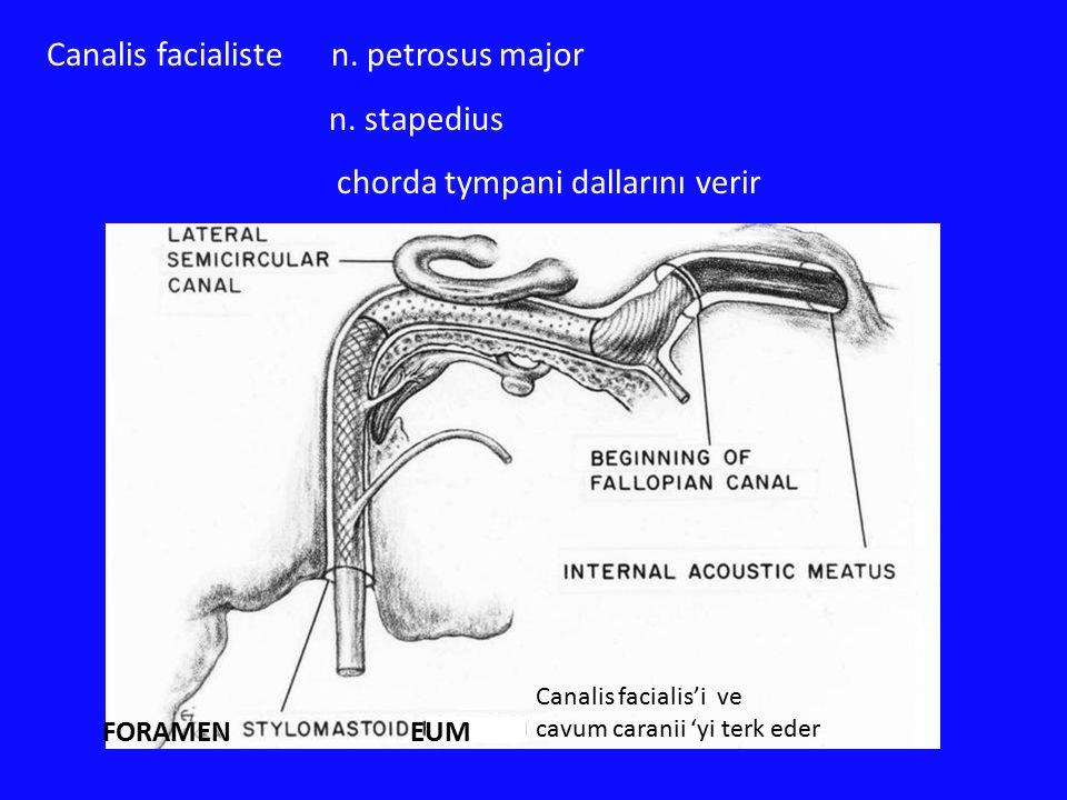 Canalis facialiste n. petrosus major n. stapedius chorda tympani dallarını verir Canalis facialis'i ve cavum caranii 'yi terk eder FORAMEN EUM