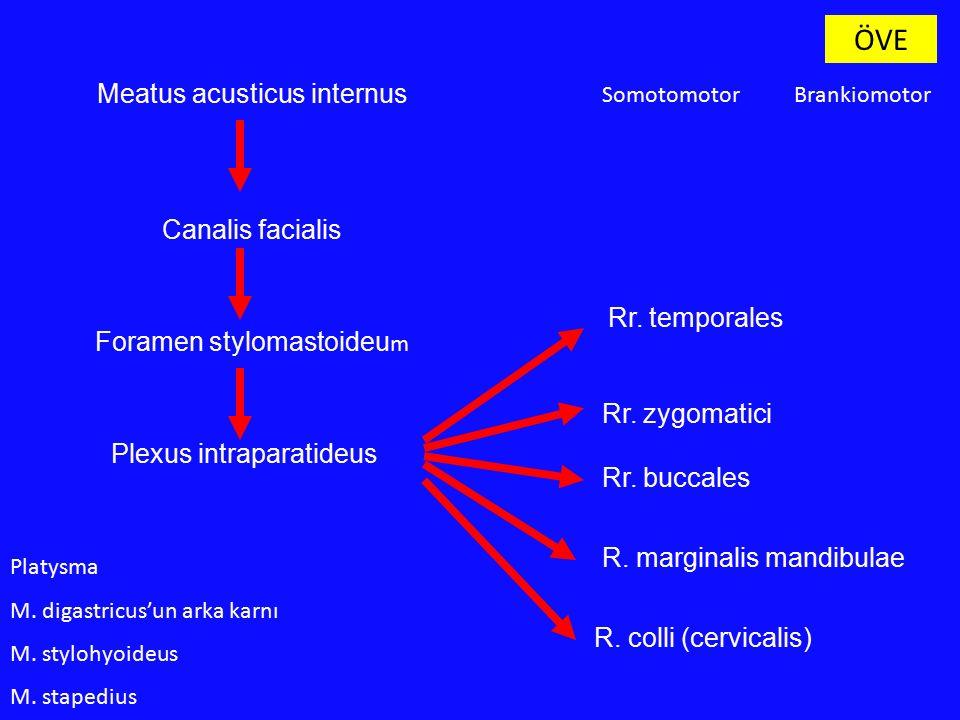 Meatus acusticus internus Canalis facialis Foramen stylomastoideu m Plexus intraparatideus Rr. temporales Rr. zygomatici Rr. buccales R. marginalis ma