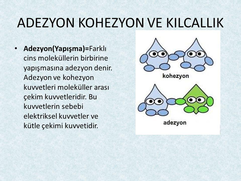 ADEZYON KOHEZYON VE KILCALLIK Adezyon(Yapışma)=Farklı cins moleküllerin birbirine yapışmasına adezyon denir. Adezyon ve kohezyon kuvvetleri moleküller