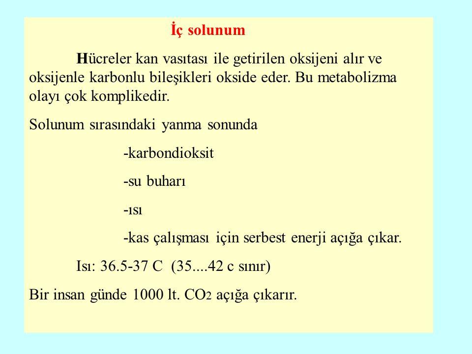Solunum Sistemi Nefes yolları: havanın geçişine yarar A- Üst solunum yolları : Burun boşlukları Yutak Arada Gırtlak (larynx) B- Alt solunum yolları: Nefes borusu (trachea) Ana bronşlar Ana dallar Solunum odacıkları: Akciğer kesecikleri (Saccus alveolaris) Alveoller