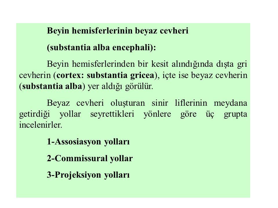 Beyin hemisferlerinin beyaz cevheri (substantia alba encephali): Beyin hemisferlerinden bir kesit alındığında dışta gri cevherin (cortex: substantia g