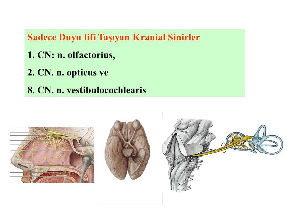 Sadece Duyu lifi Taşıyan Kranial Sinirler 1. CN: n. olfactorius, 2. CN. n. opticus ve 8. CN. n. vestibulocochlearis
