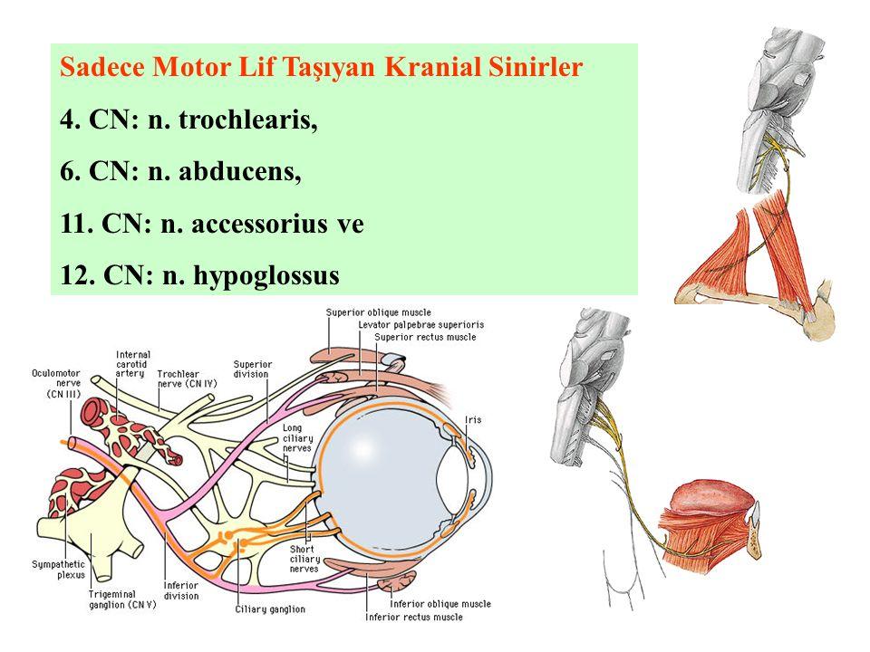 Sadece Motor Lif Taşıyan Kranial Sinirler 4. CN: n. trochlearis, 6. CN: n. abducens, 11. CN: n. accessorius ve 12. CN: n. hypoglossus