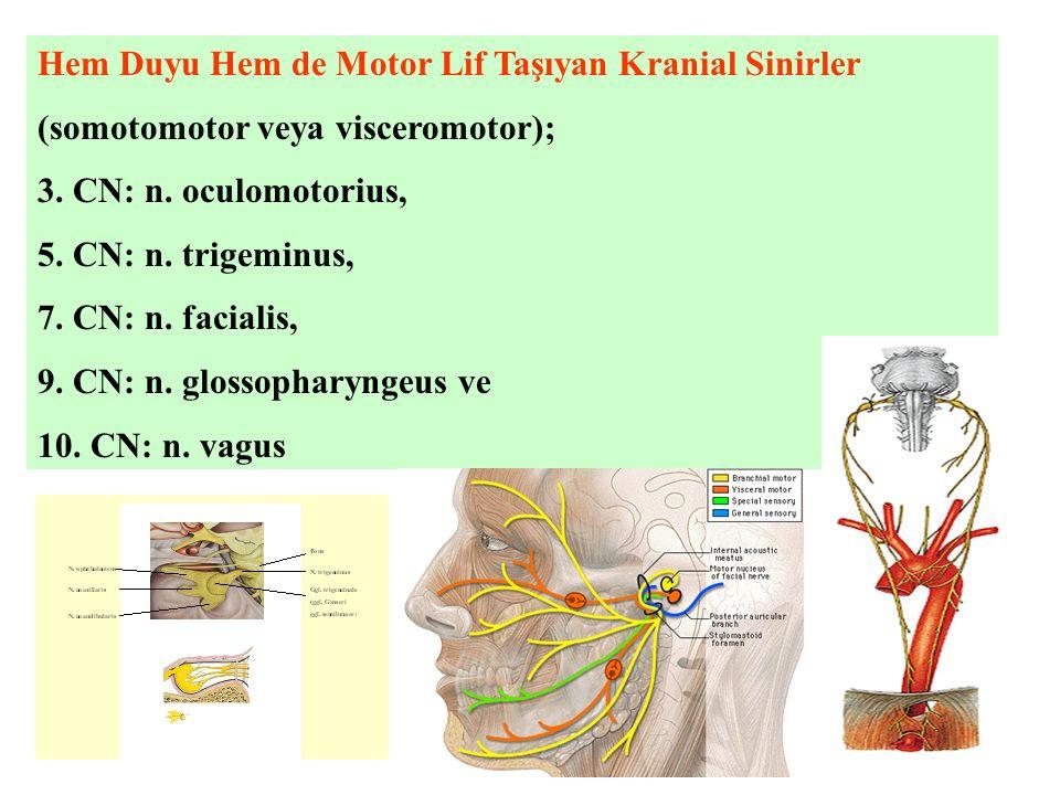 Hem Duyu Hem de Motor Lif Taşıyan Kranial Sinirler (somotomotor veya visceromotor); 3.