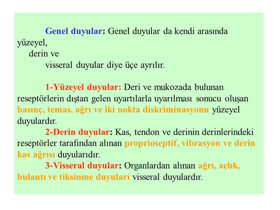 Genel duyular: Genel duyular da kendi arasında yüzeyel, derin ve visseral duyular diye üçe ayrılır. 1-Yüzeyel duyular: Deri ve mukozada bulunan resept