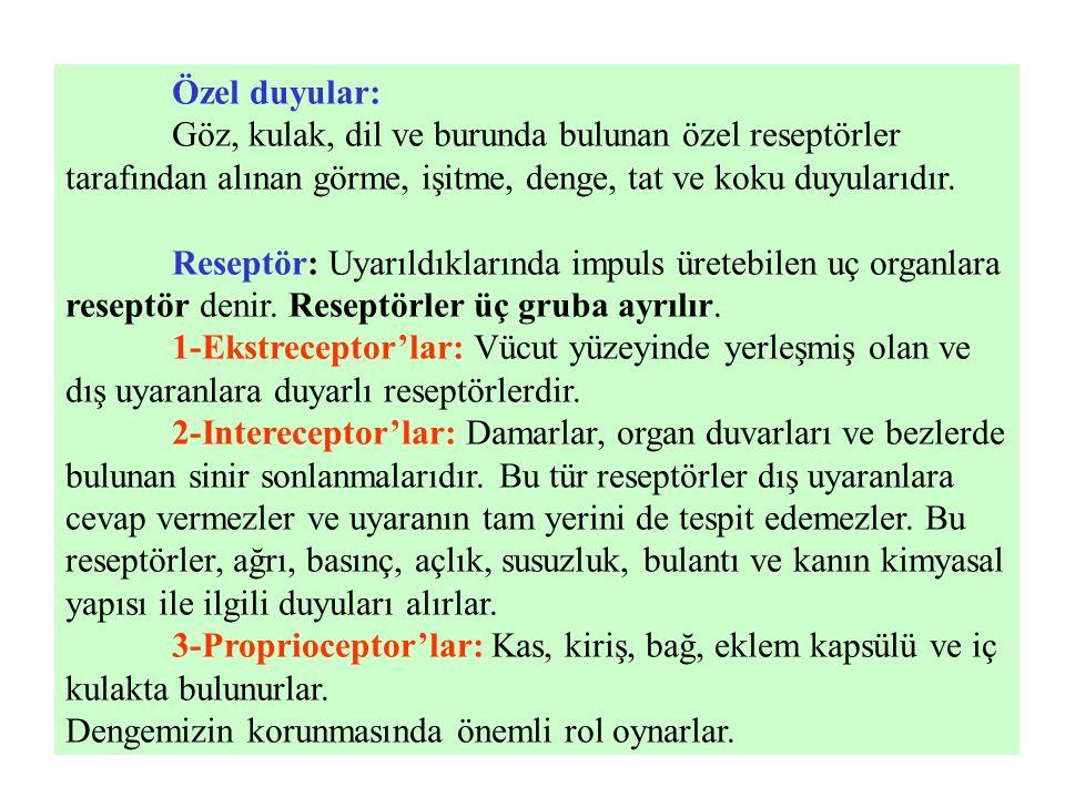 Spinal sinirlerin arka dalları (rami posteriores nervi spinales): II.
