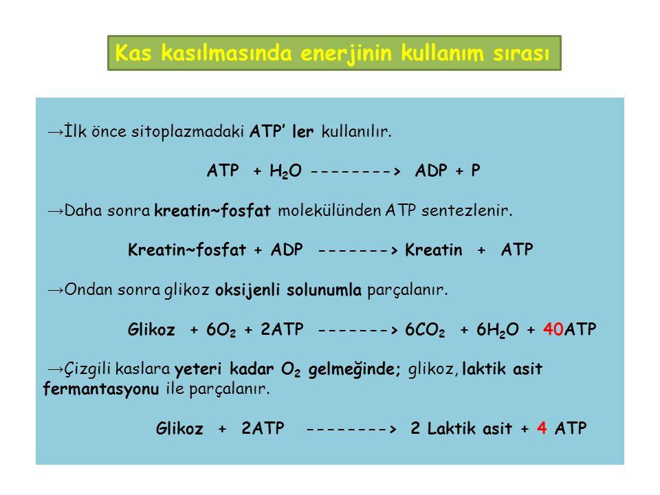 → İlk önce sitoplazmadaki ATP' ler kullanılır.