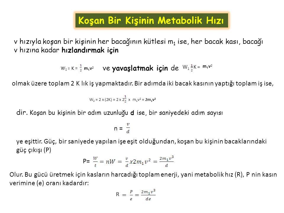 Koşan Bir Kişinin Metabolik Hızı v hızıyla koşan bir kişinin her bacağının kütlesi m 1 ise, her bacak kası, bacağı v hızına kadar hızlandırmak için m1v2 m1v2 W 1 = K = ve yavaşlatmak için de W 1 =K = m1v2m1v2 olmak üzere toplam 2 K lık iş yapmaktadır.