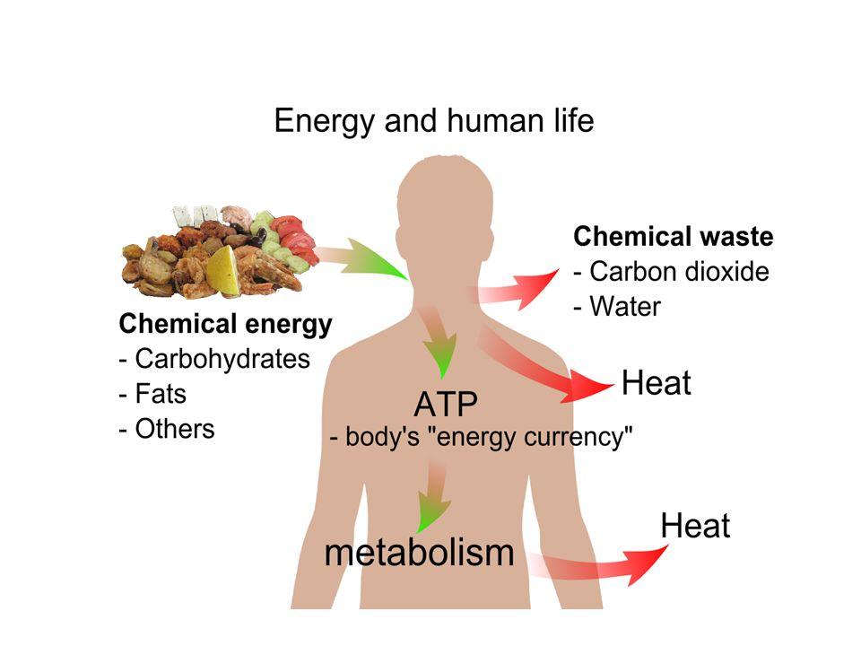 Adenozin–trifosfat (ATP) ATP, adenozin adı verilen kompleks bir elemandan ve bu maddeye bağlı üç fosfat grubundan oluşur.