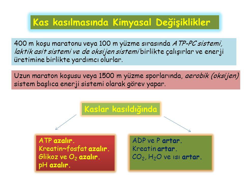 Kaslar kasıldığında ATP azalır. Kreatin~fosfat azalır.
