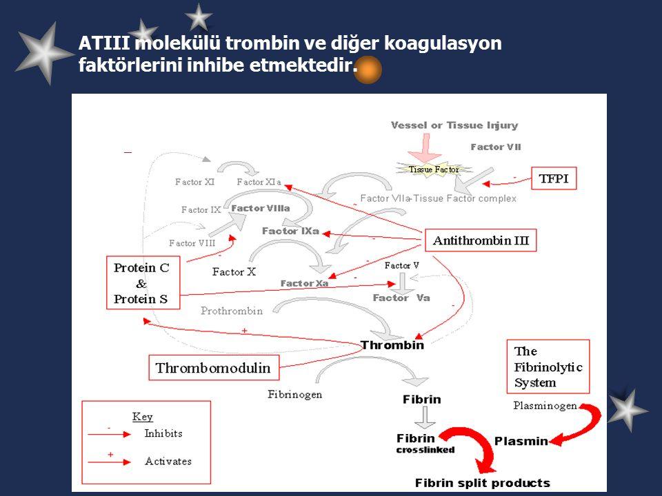 ATIII molekülü trombin ve diğer koagulasyon faktörlerini inhibe etmektedir.