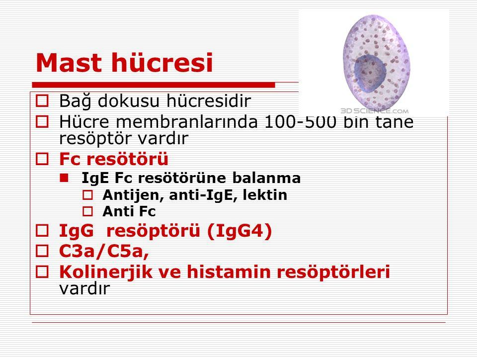Mast hücresi  Bağ dokusu hücresidir  Hücre membranlarında 100-500 bin tane resöptör vardır  Fc resötörü IgE Fc resötörüne balanma  Antijen, anti-IgE, lektin  Anti Fc  IgG resöptörü (IgG4)  C3a/C5a,  Kolinerjik ve histamin resöptörleri vardır