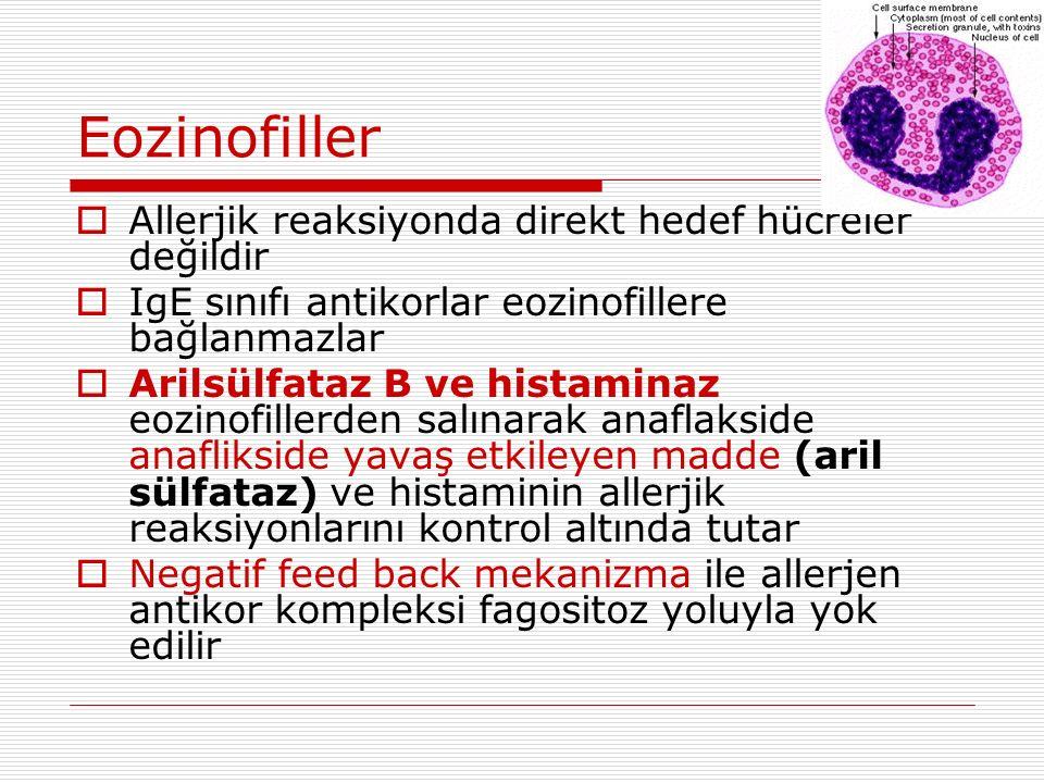 Eozinofiller  Allerjik reaksiyonda direkt hedef hücreler değildir  IgE sınıfı antikorlar eozinofillere bağlanmazlar  Arilsülfataz B ve histaminaz eozinofillerden salınarak anaflakside anaflikside yavaş etkileyen madde (aril sülfataz) ve histaminin allerjik reaksiyonlarını kontrol altında tutar  Negatif feed back mekanizma ile allerjen antikor kompleksi fagositoz yoluyla yok edilir