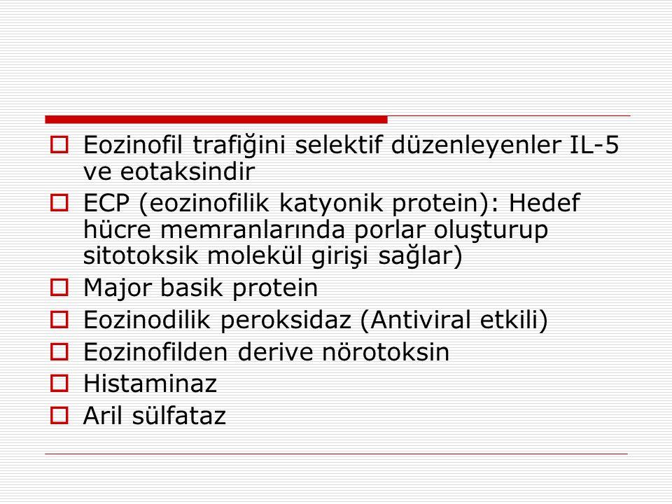  Eozinofil trafiğini selektif düzenleyenler IL-5 ve eotaksindir  ECP (eozinofilik katyonik protein): Hedef hücre memranlarında porlar oluşturup sitotoksik molekül girişi sağlar)  Major basik protein  Eozinodilik peroksidaz (Antiviral etkili)  Eozinofilden derive nörotoksin  Histaminaz  Aril sülfataz