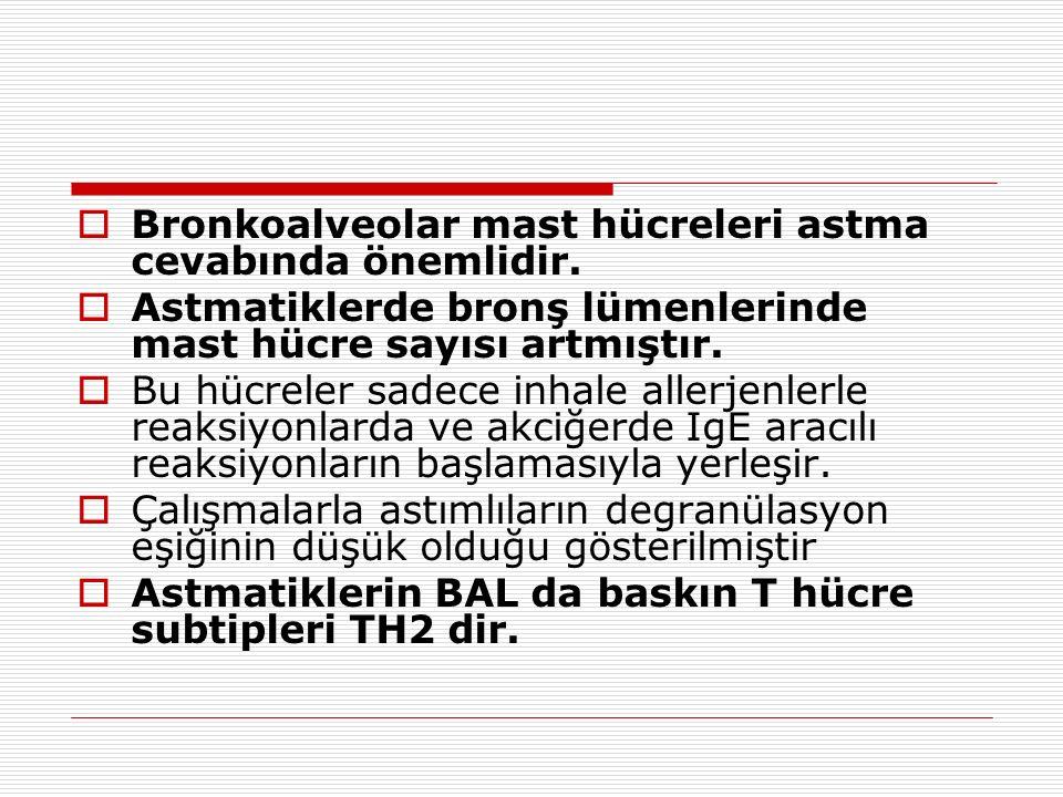  Bronkoalveolar mast hücreleri astma cevabında önemlidir.