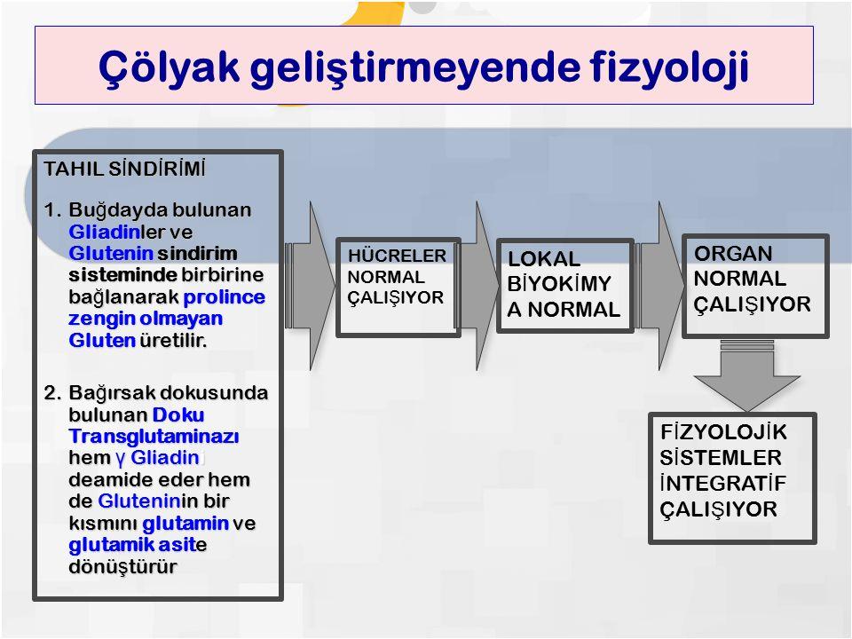 Çölyak geli ş tirmeyende fizyoloji TAHIL S İ ND İ R İ M İ 1.Bu ğ dayda bulunan Gliadinler ve Glutenin sindirim sisteminde birbirine ba ğ lanarak prolince zengin olmayan Gluten üretilir.