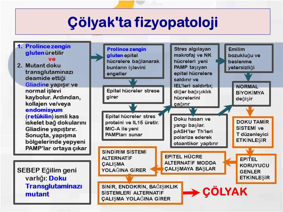 Çölyak ta fizyopatoloji 1.Prolince zengin gluten üretilir ve 2.Mutant doku transglutaminazı deamide etti ğ i Gliadine yapı ş ır ve normal i ş levi kaybolur.