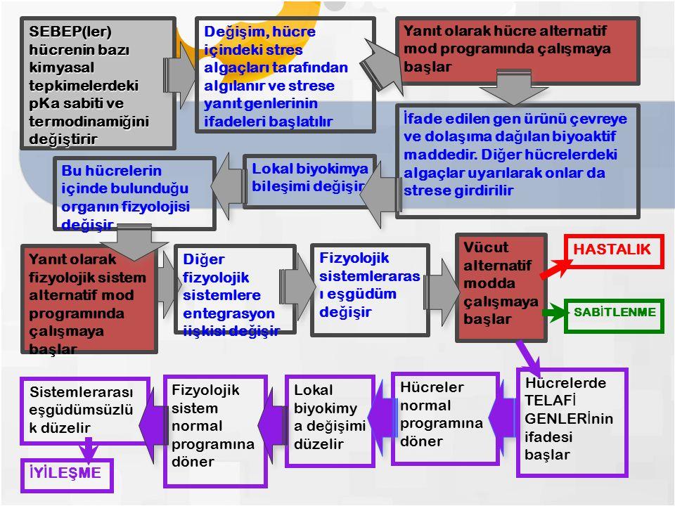 5 Örnek bir İ mmünopatolojik Hastalı ğ ın Fizyopatolojik Çözümlenmesi (ÇÖLYAK HASTALI Ğ I)