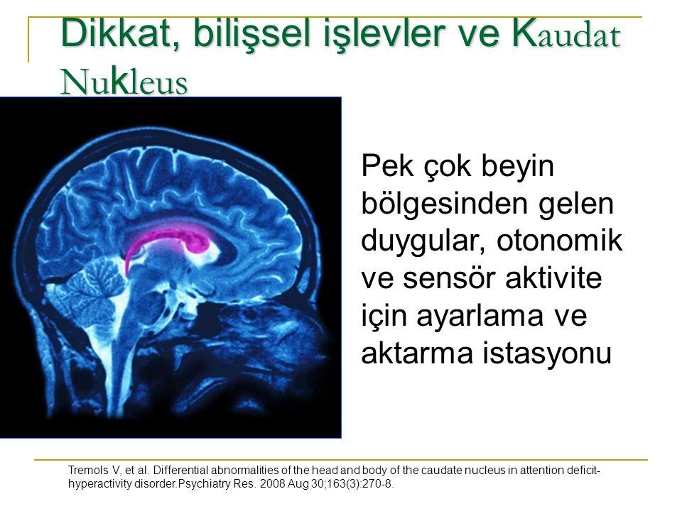 Dikkat, bilişsel işlevler ve K audat Nu k leus Pek çok beyin bölgesinden gelen duygular, otonomik ve sensör aktivite için ayarlama ve aktarma istasyonu Tremols V, et al.